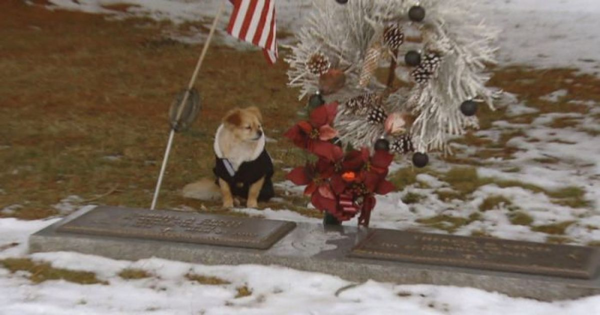 This Dog Is So Loyal That She Refuses To Leave Her Owner's Gravesite And It's Heartbreaking