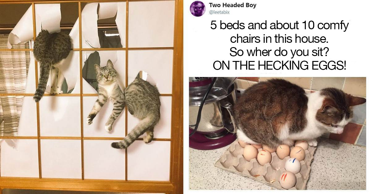 These Hilarious Pictures Will Show You Just How Much Of a Pain In The Ass Cats Can Be