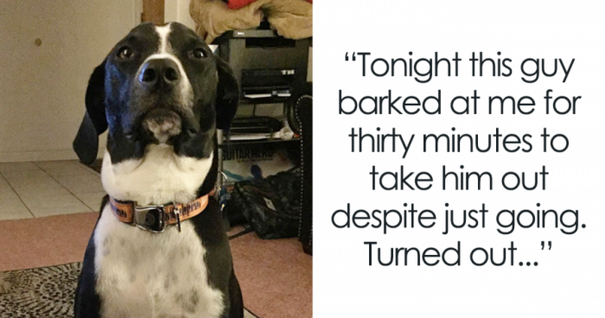 10+ Real Life Super Hero Doggos We Are All Super Impressed By