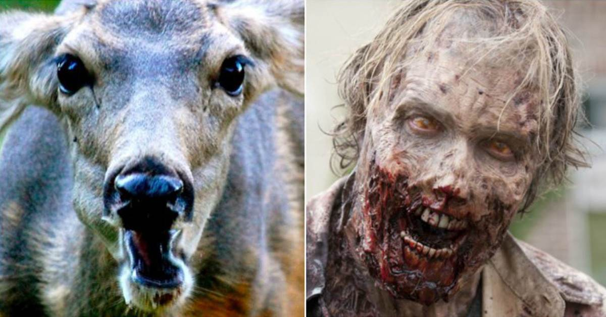 Scientists Warn The Zombie Apocalypse May Be In Our Near Future Thanks To This 'Zombie Disease'