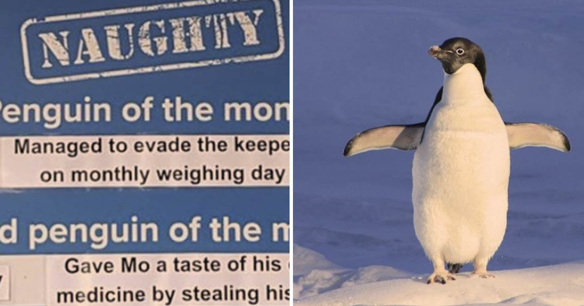 This Animal Aquarium Picks A Naughty Penguin Every Month And Their Crimes Are So Wholesome