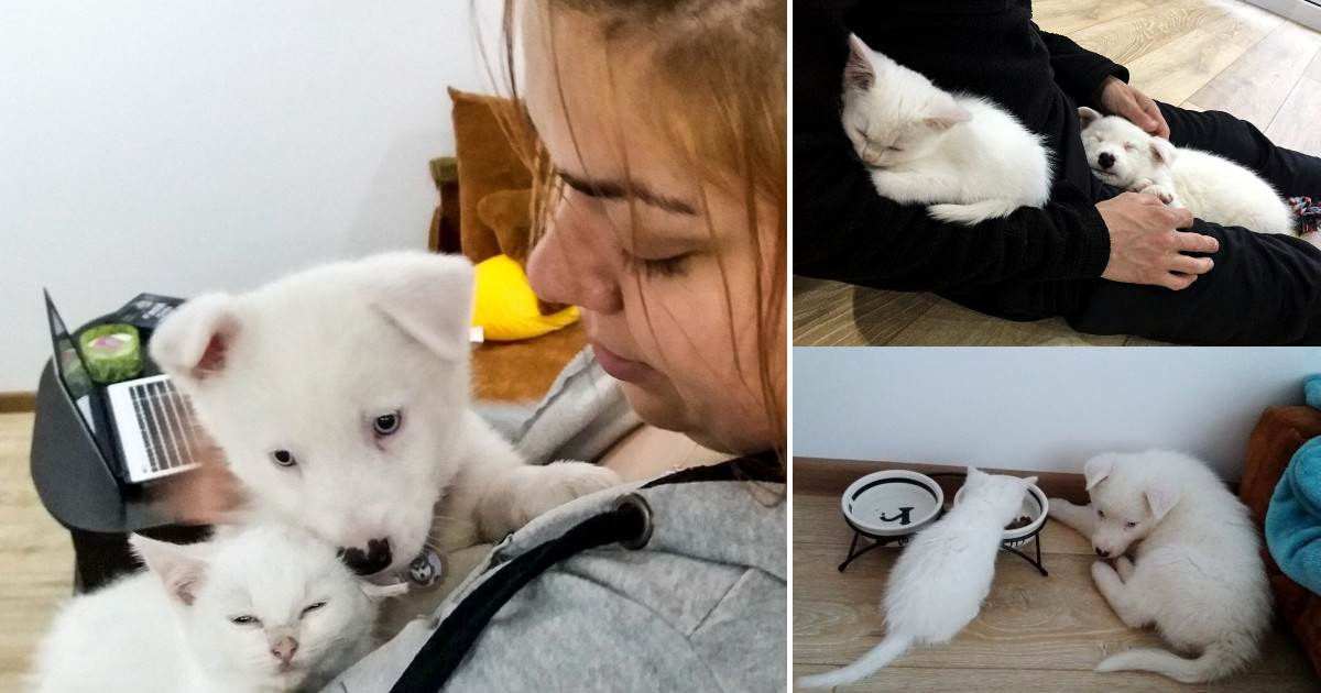 Family Wanted A Play Mate For Their Puppy And A Stray Kitten Found Them Before They Found Her