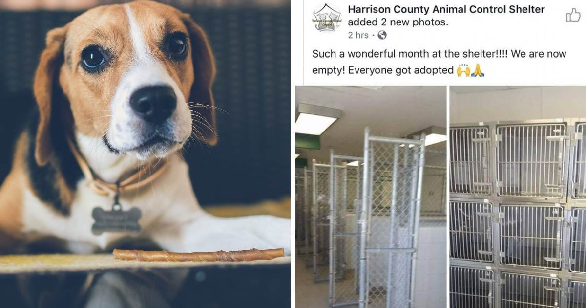 This Indiana Shelter Hits A Milestone By Adopting Out All Their Animals