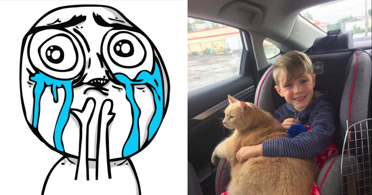 This Boy Delightfully Surprises Everyone When Mom Lets Him Pick Out A Shelter Cat And He Chooses The Old, Fat One