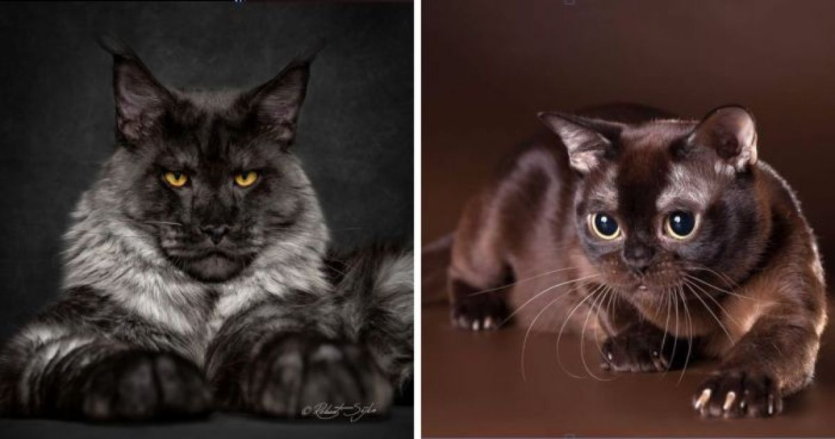 The Most Beautiful and Rare Cat Fur Colors
