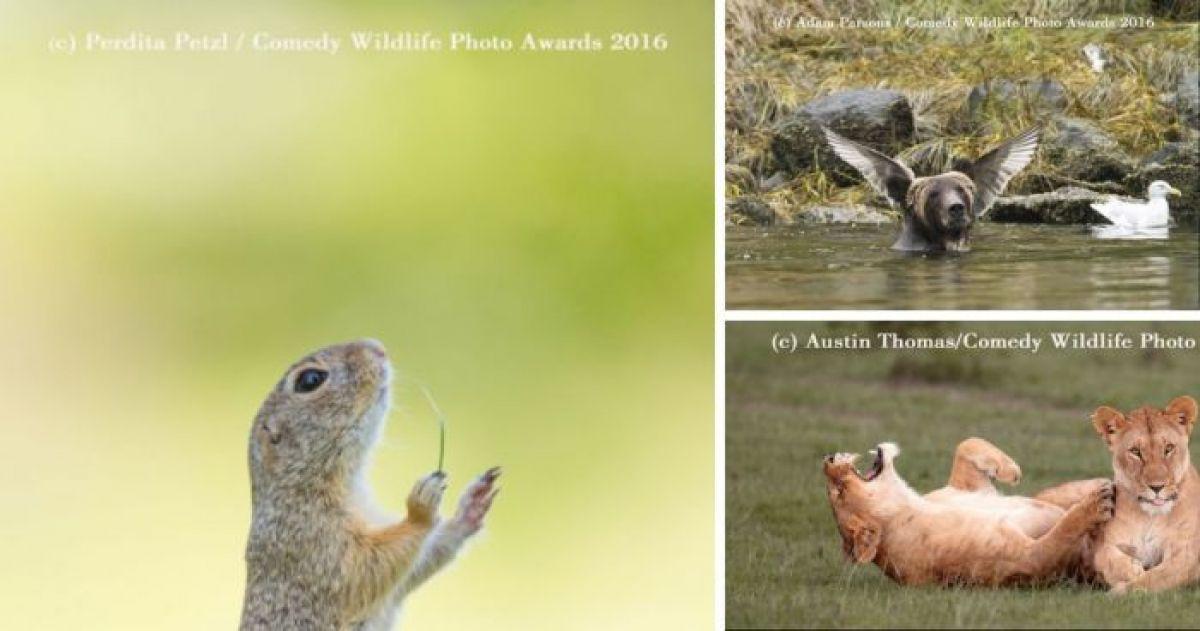 12 Hysterically Unphotogenic Animals