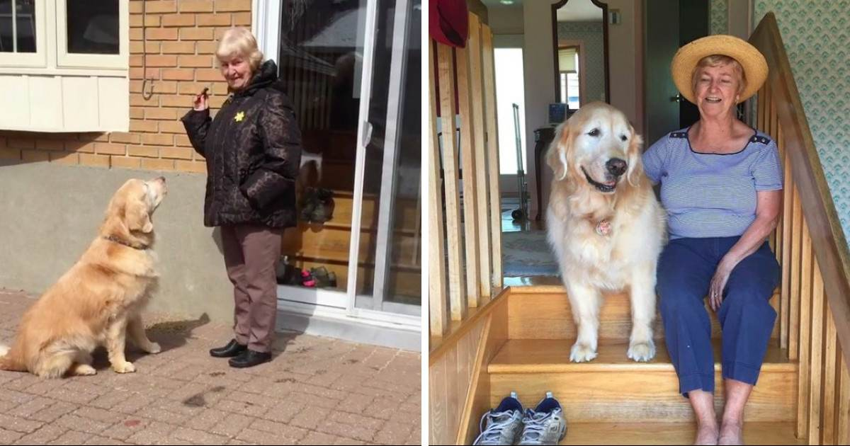 Senior Dog Insists On Visiting His Elderly Friend Every Single Day