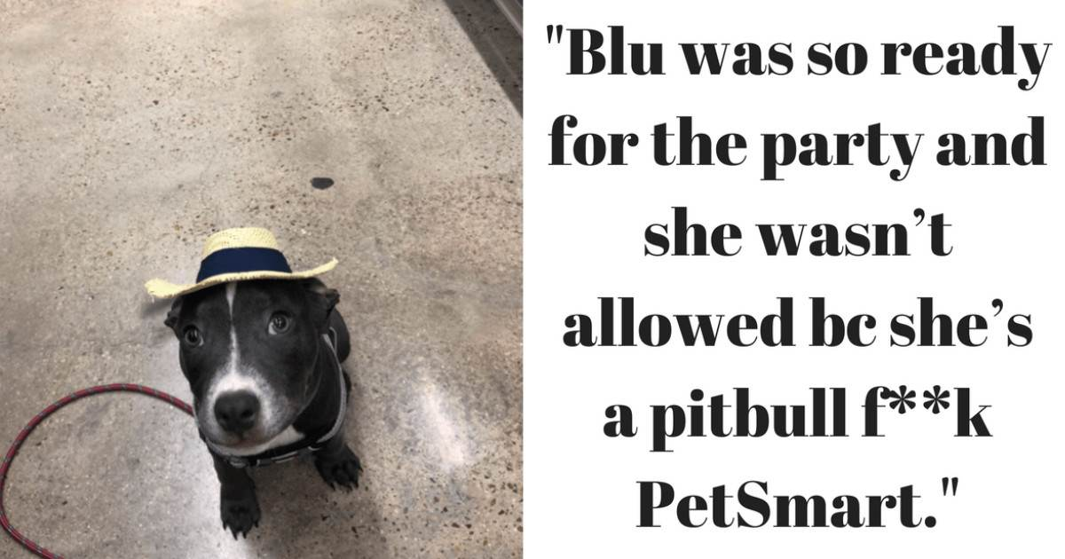 "Pitbull Was Banned From Going To PetSmart's Dog Party Because They Believe ""Pitbulls Are Bully Breeds"""