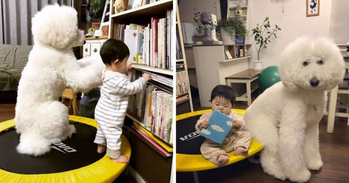 A Little Japanese Girl And Her Poodle Will Make You Believe In True Friendship
