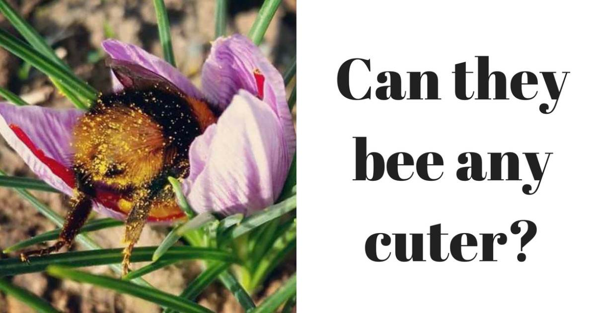 Someone Saw How Cute Bumblebee Butts Are And Now We're Obsessed