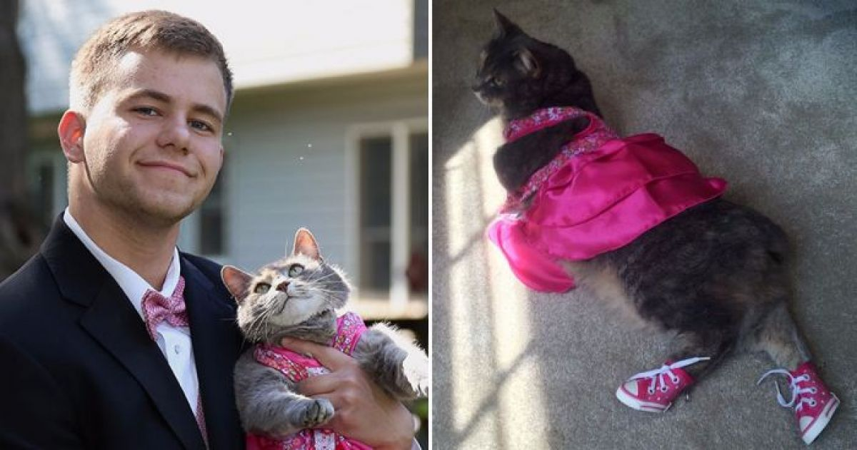 This Guy Managed To Find The Best Prom Date Ever, His Cat