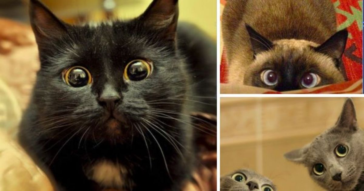 10+ Cats Making The Best Faces You'll Ever See