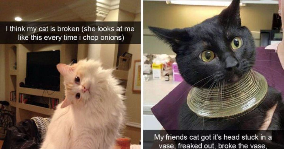 Cat Got Head Stuck In Vase Best Vase Decoration 2018