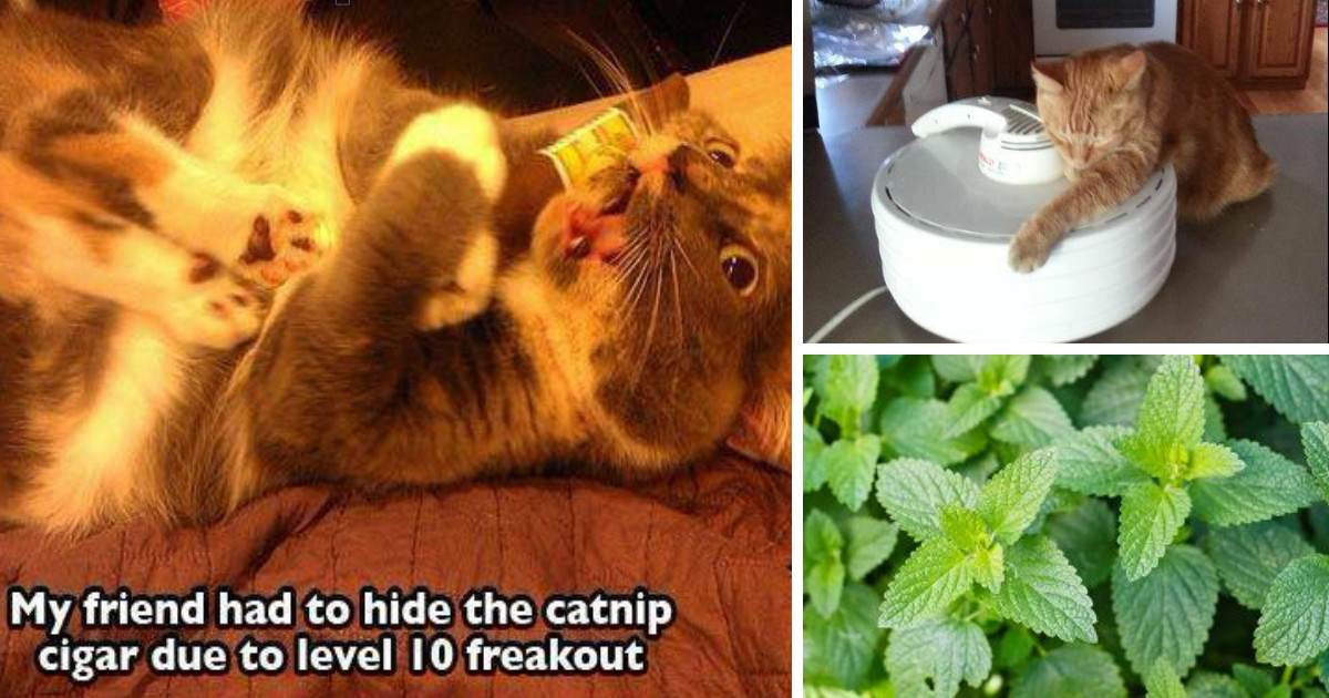 This Collection Of Cats High On Catnip Is The Funniest Thing You'll See All Week