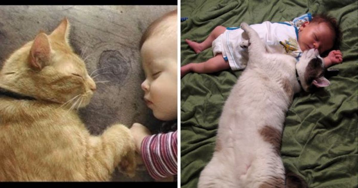 14 Times Cats and Babies Melted Our Hearts