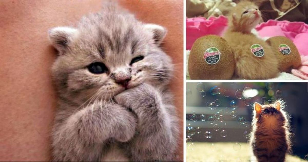 15 of the Cutest Kittens in the Entire World