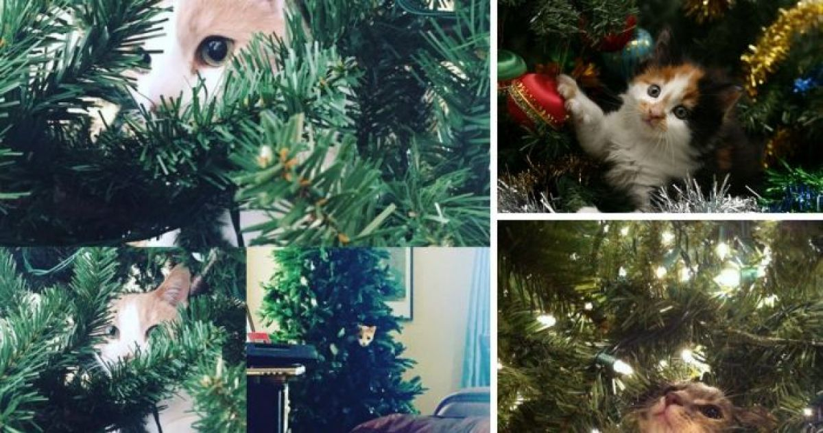 16 Absolutely Adorable Cats in Christmas Trees