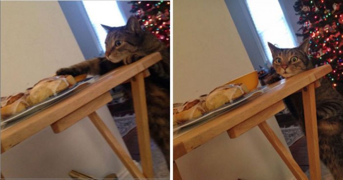 16 Times Our Pets Were Hilariously Caught In The Act