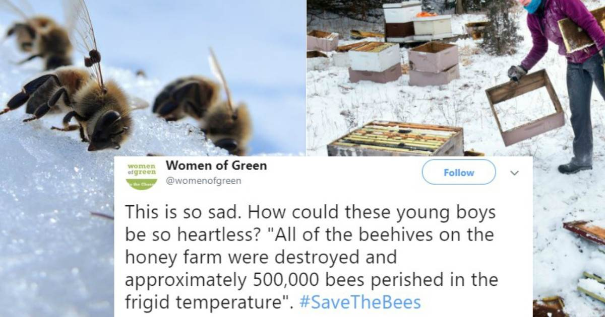 These Teenagers are Facing Serious Jail Time for Killing Bees