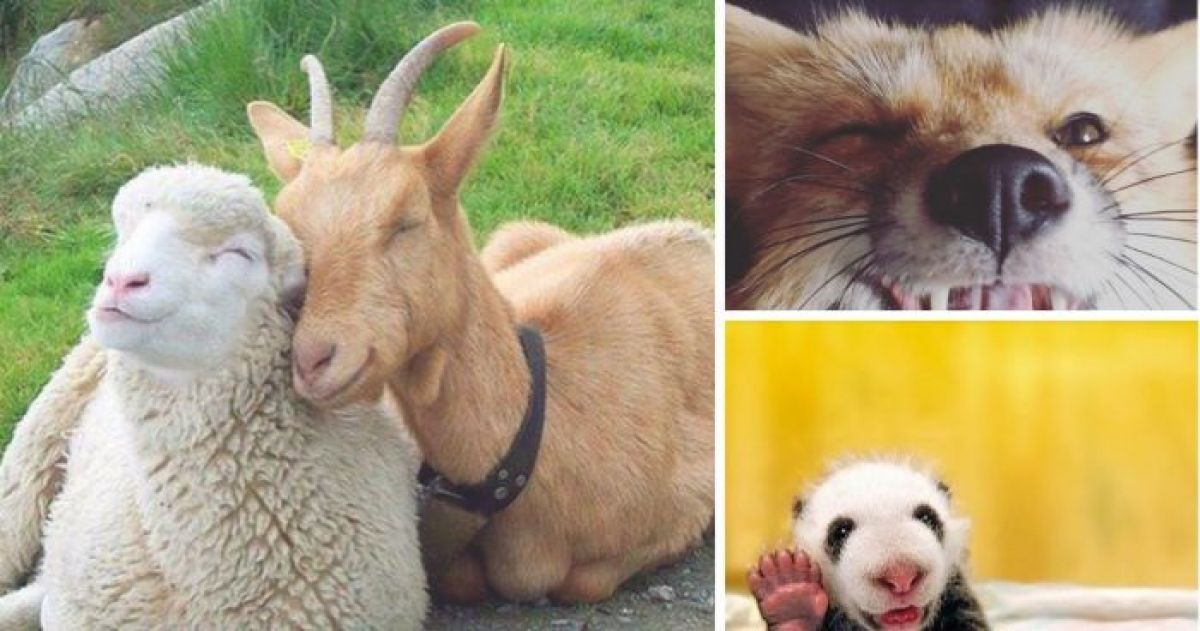 14 Animals Smiling You Need to See RIGHT NOW!