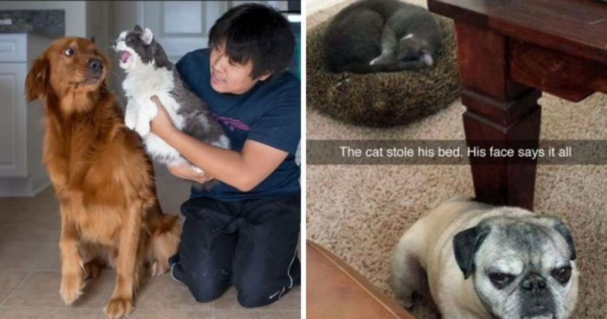 Cattos and Doggos Not Living In Harmony When Their Owners Thought They Would