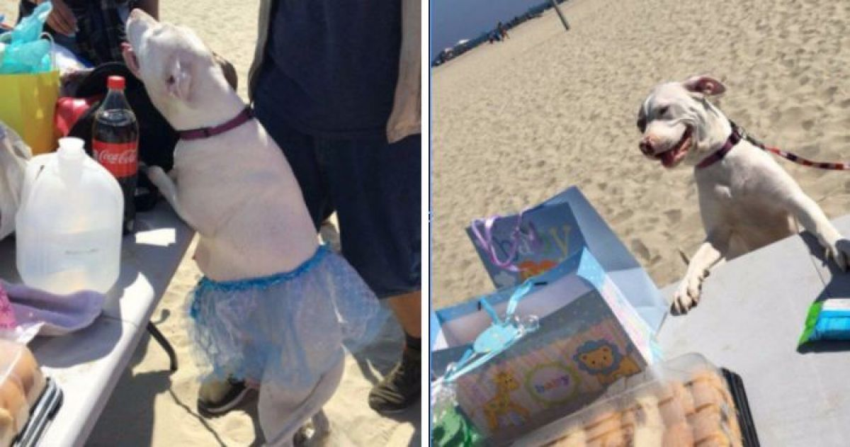 Twitter Blew Up When This Doggo's Baby Shower Went Viral
