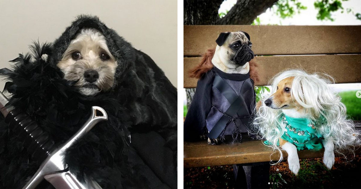 "Game Of Thrones Fans Dress Their Doggos Up As Characters And Dub It ""Game Of Bones"""