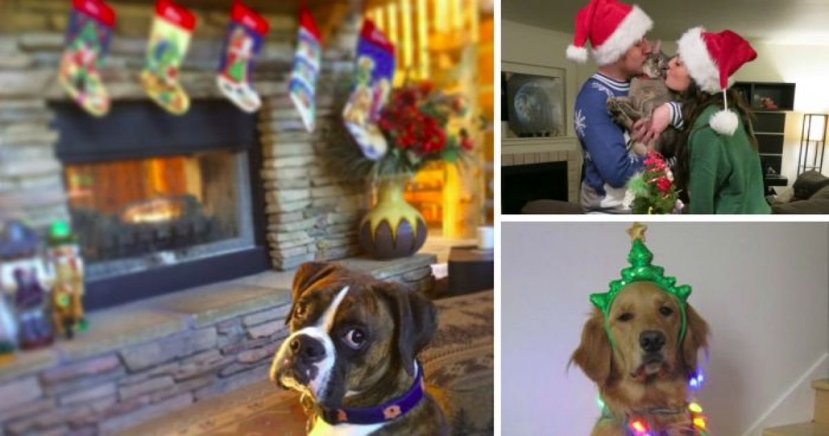 10+ Pets Who Have No Holiday Cheer Despite Our Best Efforts