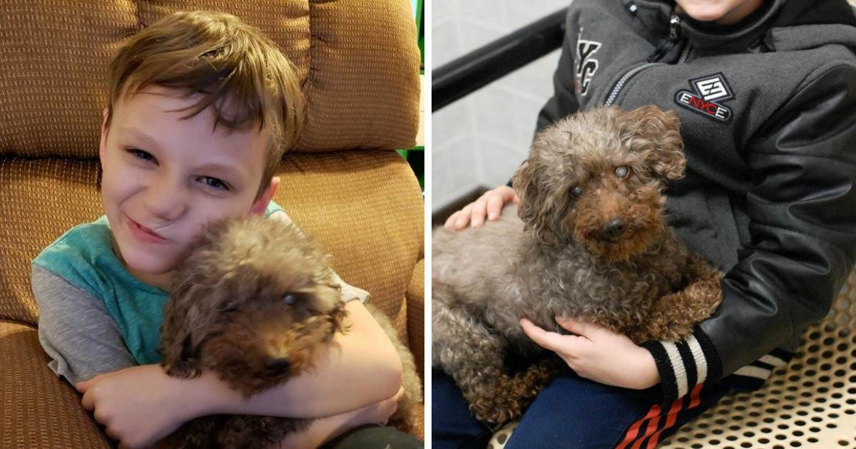 This Generous Boy Picked A Dog From The Rescue Shelter And His Choice Was Perfect
