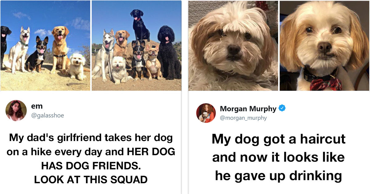 If You Happen To Be a Proud Dog Owner, Then You Will Absolutely Love These Dog Tweets