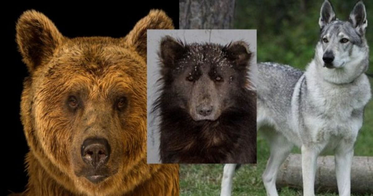 The Truth About The Russian Bear-Dog Has Finally Been Revealed And Everyone Is Stunned