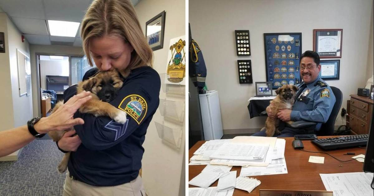 This Rescue Pup Was Hired as a Police Dog for the Best Reason Possible