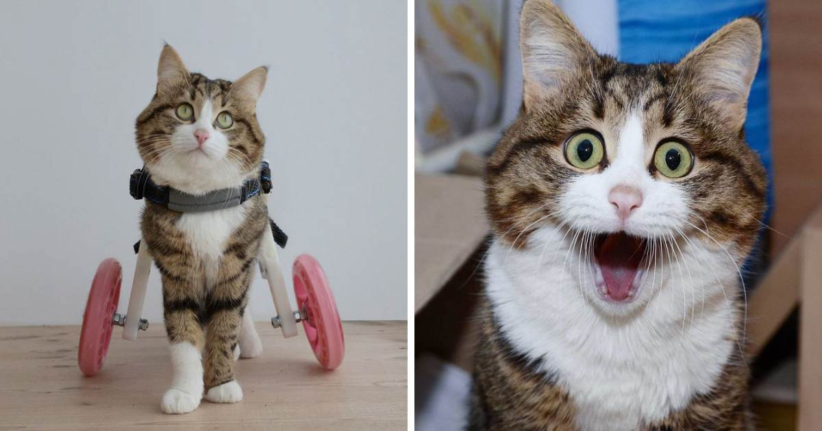 Meet The Cat That Is Taking The Internet By Storm With His Funny Facial Expressions Despite The Fact That He Is Disabled
