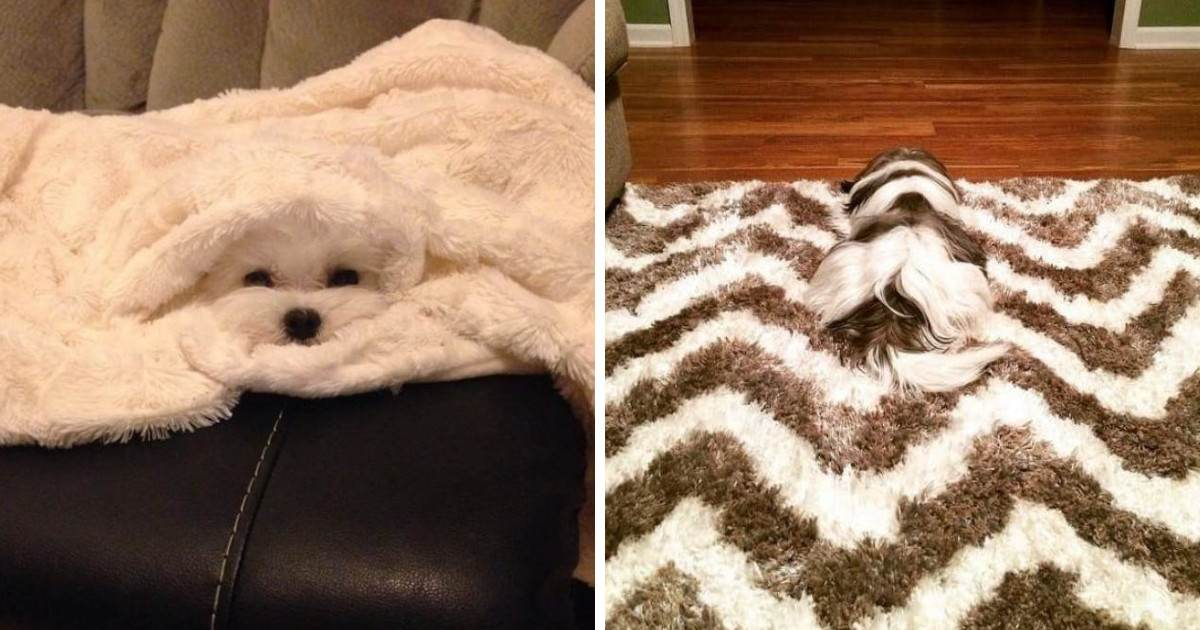 Dogs That Blend So Well Into Their Surroundings That You Just Might Step On Them