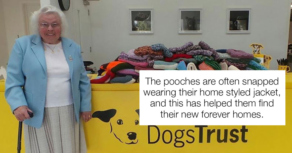 Wholesome Grandma Spends Hours Knitting Blankets and Sweaters For Shelter Dogs