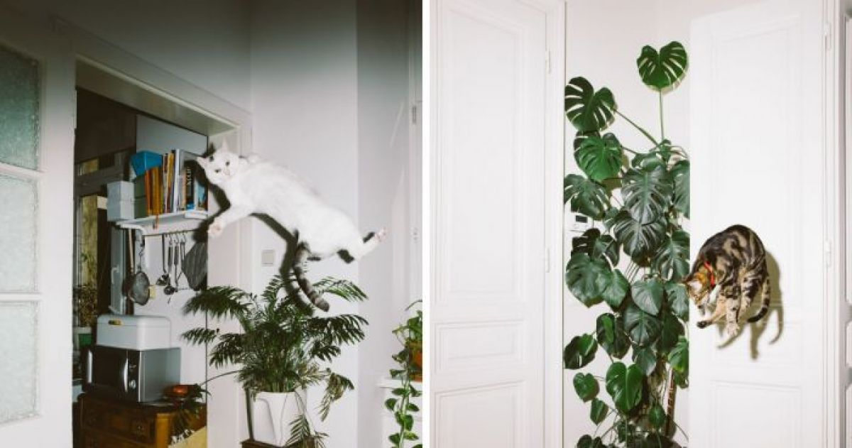 13 Cats Brilliantly Caught Mid-Pounce
