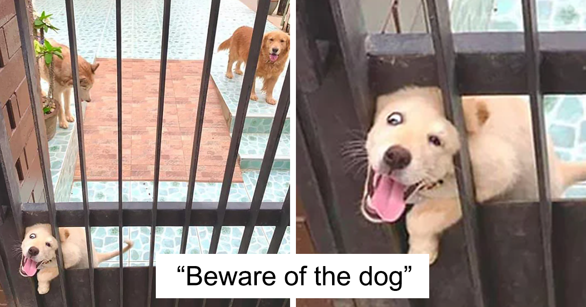 "30 Of The Most ""Dangerous"" And Absolute Cutest ""Guard"" Dogs Around"