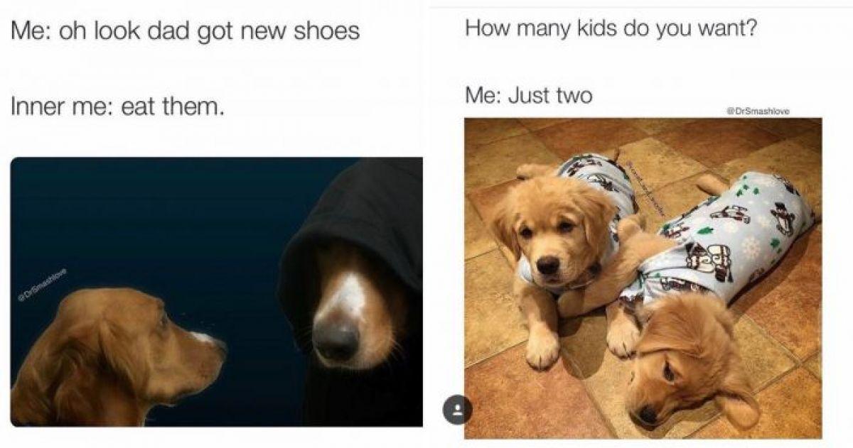 tdvnAgwzmjfT_1242 15 hilarious doggo memes guaranteed to make your day