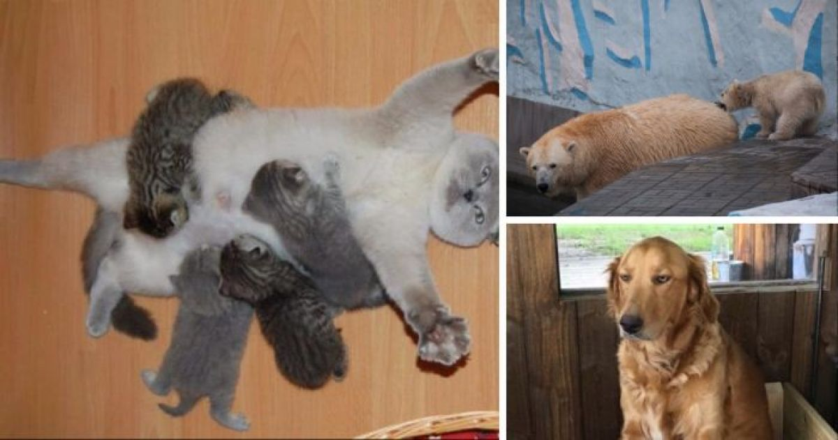 12 Animals Every Mom Can Relate To