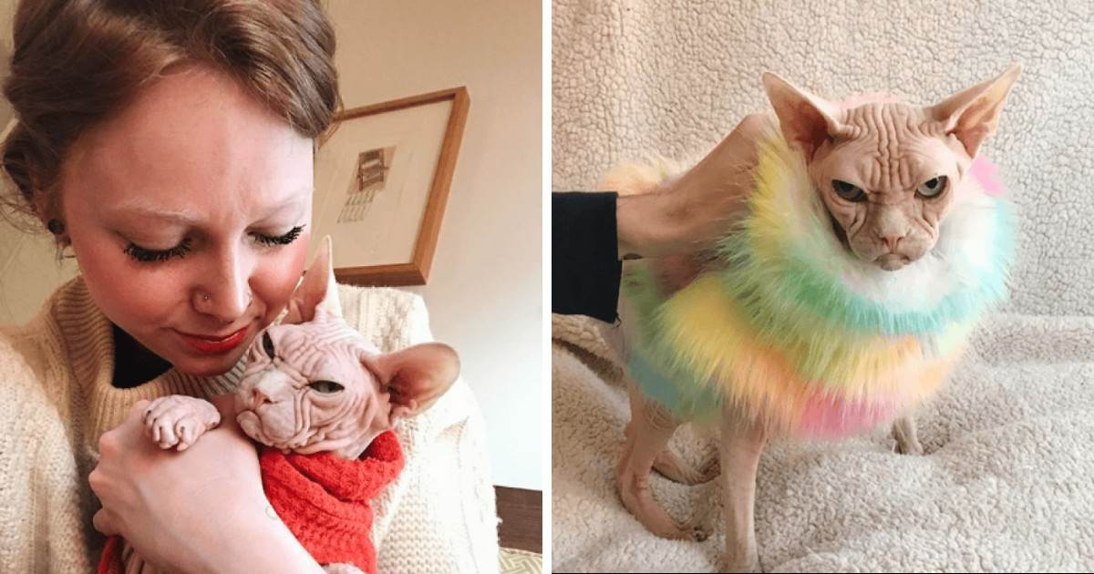 Loki The Grumpy Sphynx Cat Is Here And People Are Saying He's The New Grumpy Cat