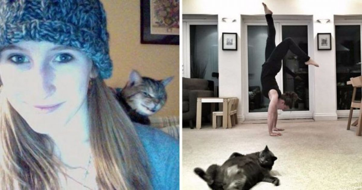 12 Cats Who LOVE To Photobomb Their Humans' Pictures