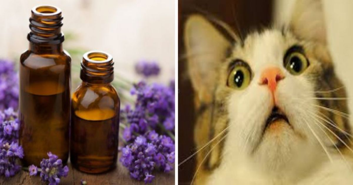 This Woman's Cat Almost Died After She Started Using Essential Oils