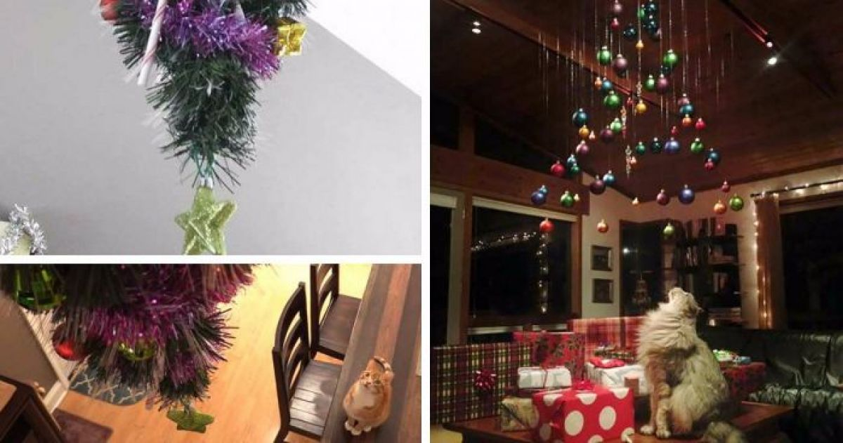 14 Christmas Trees That Your Cat Can't Destroy