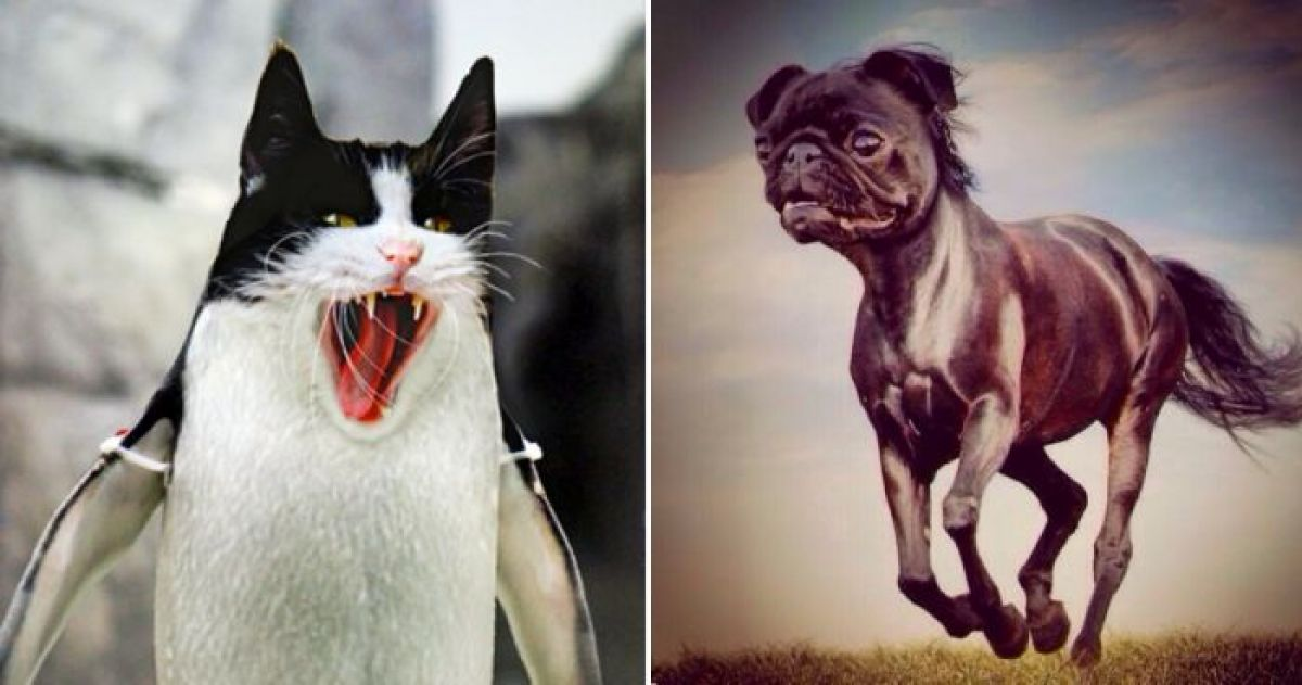 Photoshopped Animals That We Wish Really Existed IRL