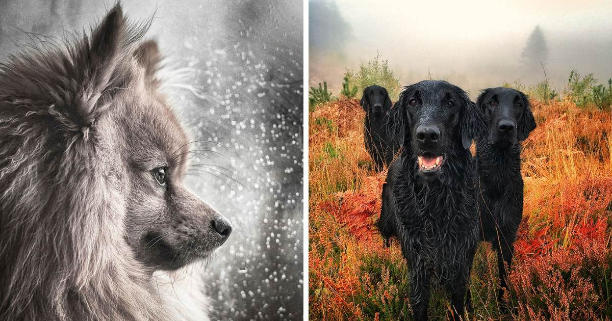 National Geographic Just Announced The Best Dog Photos Of 2018 And It's Going To Make You Swoon With Love