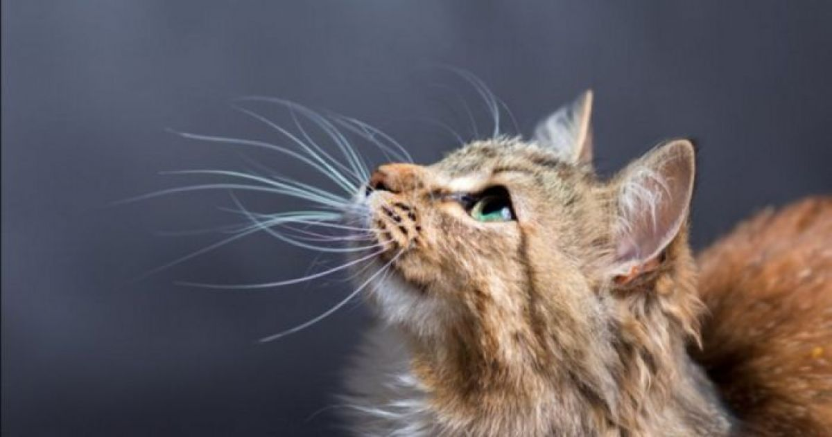 15 bizarre cat facts you never knew before today